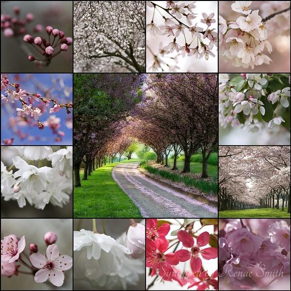 Blossom Collage