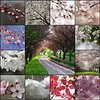 Blossom Collage