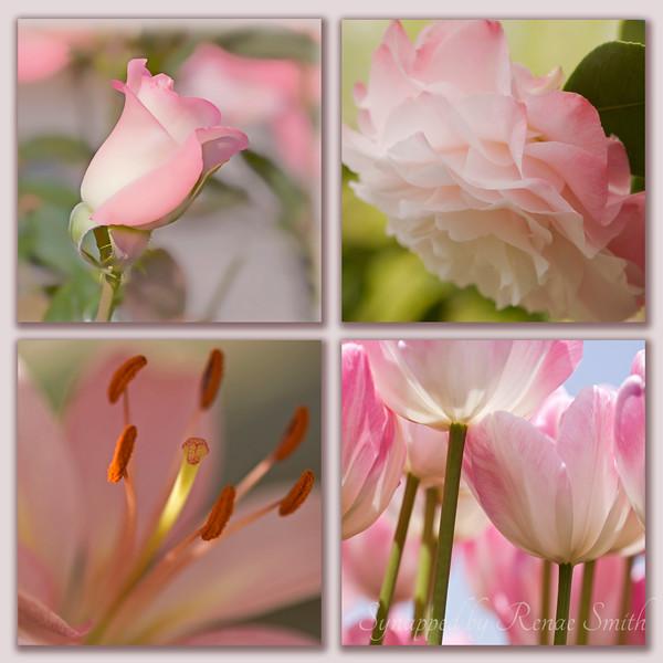 Pink Flower Collage