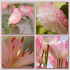 Pink Flower Collage