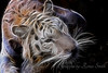Bengal Tiger (in a Fractaled mood)