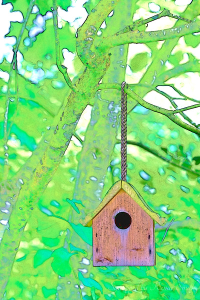 A Home for the Birds