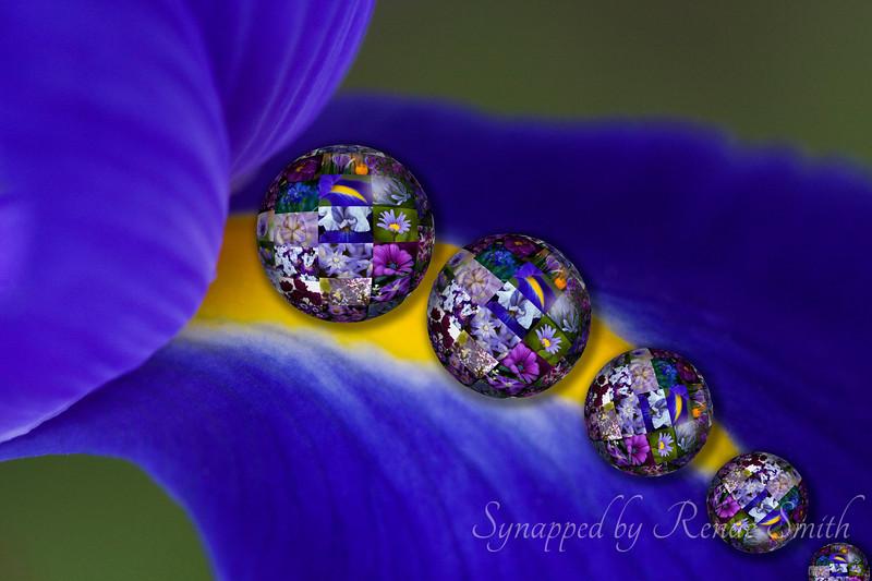 Purple Spheres