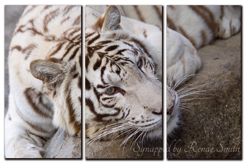 Papter Tiger -- Collage