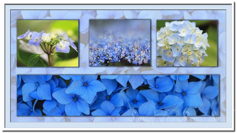 Hydrangea Collage