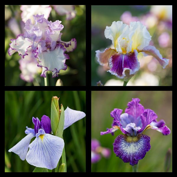 Purple Passion (originals)