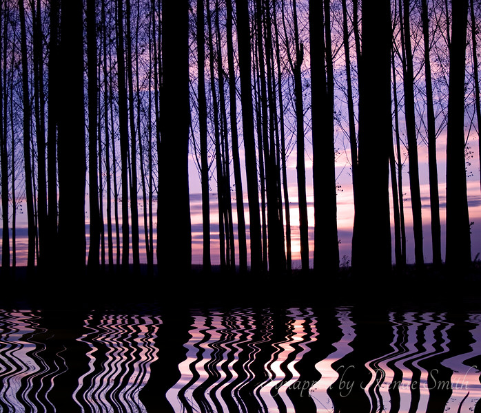 Poplar Sunset -- Flooded