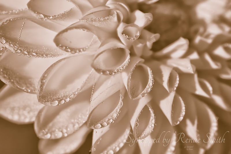 Pure and Simple (Sepia)