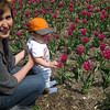 Inspecting the flowers at Tulip garden in Baltimore