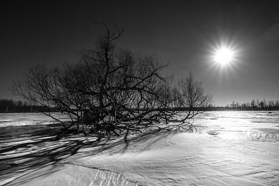 Winter Tree Project