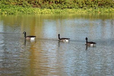 Vasona County Park By Den-11/29/17