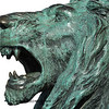 bronze sculpture of a roaring lion isolated against a white background