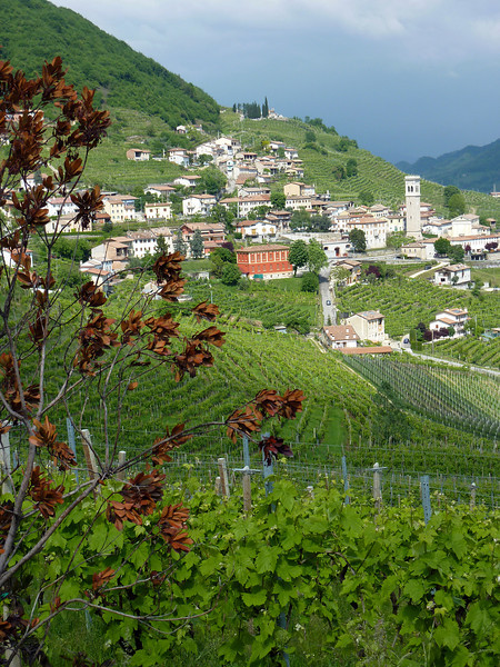 Tuscan Scene 2