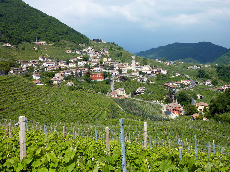 Italien Scene-Winery