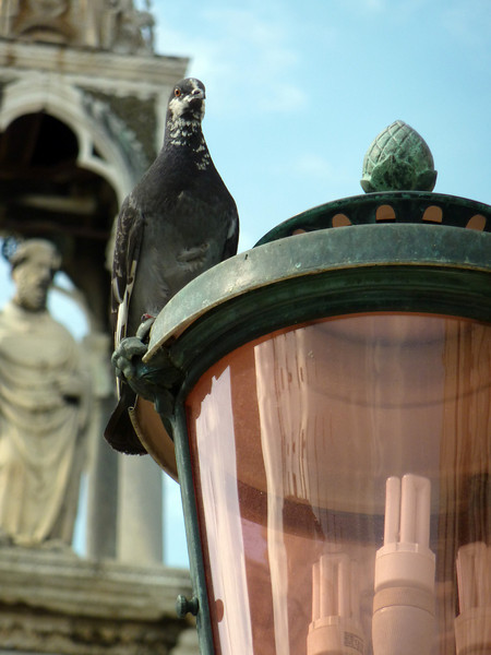 Pidgeon on lamp