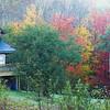 House and Foliage
