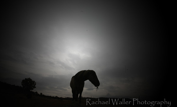 Seeing with her nearly blind eyes I try to understand her new world. Dancer in the pasture. Rachael Waller Photography