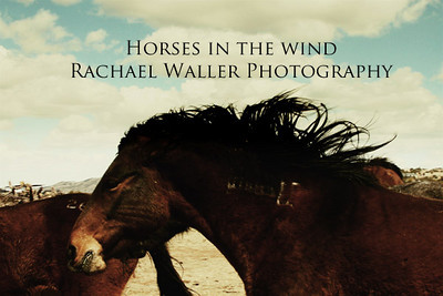 Horses in the wind Rachael Waller photography 2010