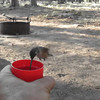 Video MVI_0268.mov<br /> I'm feeding the hummingbirds at Woods Canyon Lake on June 24, 2012