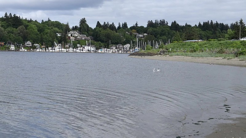 Incoming tide on Budd Inlet in Olympia, Washington<br /> Time Lapse - May 2020
