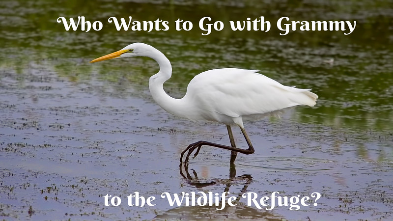 Who-who-whoooo Wants to Go with Grammy to the Wildlife Refuge?