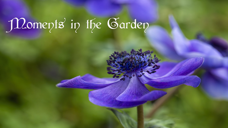 Moments in the Garden -- Version 1