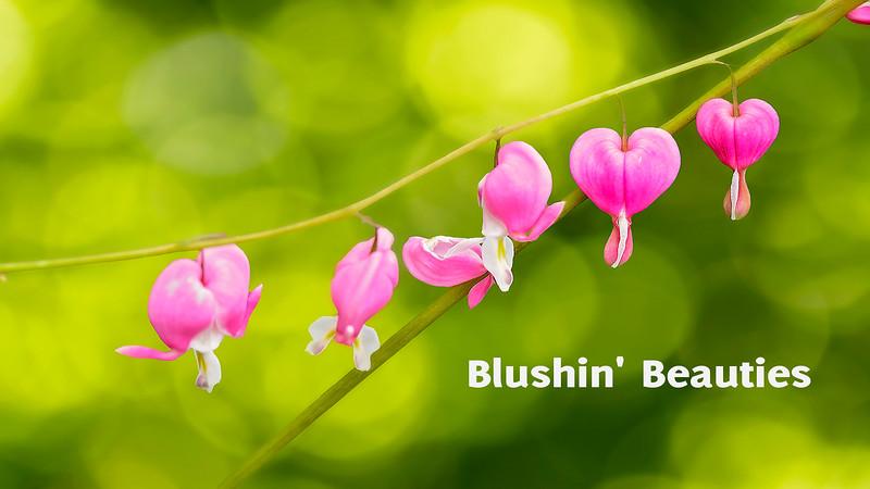 Blushin' Beauties