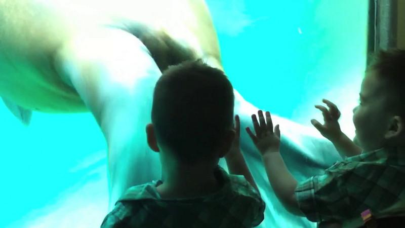 Grandchildren Davin and Peyton encountering a walrus at the Point Defiance Zoo & Aquarium in Tacoma, Washington.