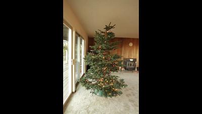 taylor tree vid