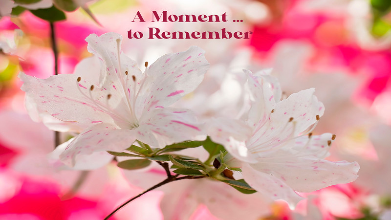 A Moment ... to Remember