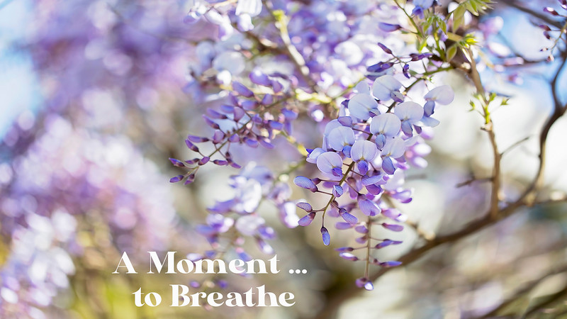 A Moment ... to Breathe
