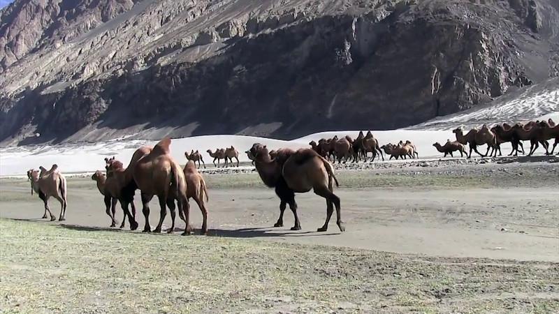 Srinagar & Ladakh