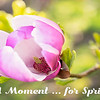 A Moment ... for Spring