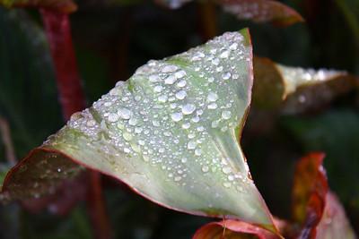 Volksgarten, leaf in the sprinkler.