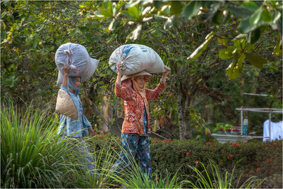 Women Walk along a Canal in the Mekong Delta Region of Vietnam.