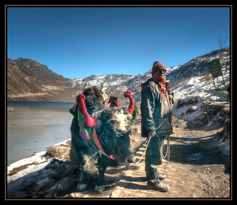 A Man and His Yak, Changu (Tsomgo) Lake, Sikkim, India.