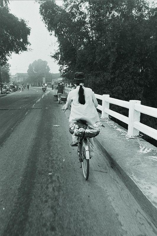 ducks on a bike