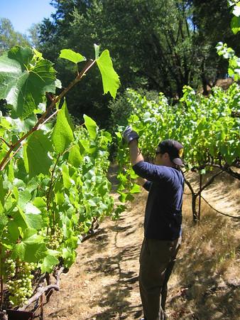 vineyard 2007