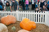 Virginia State Fair 2014-8761
