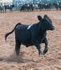 Virginia State Fair 2014-8601