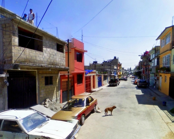 un perro en Calle Cuauhtemoctzin
