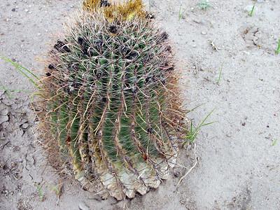 Large cactus.