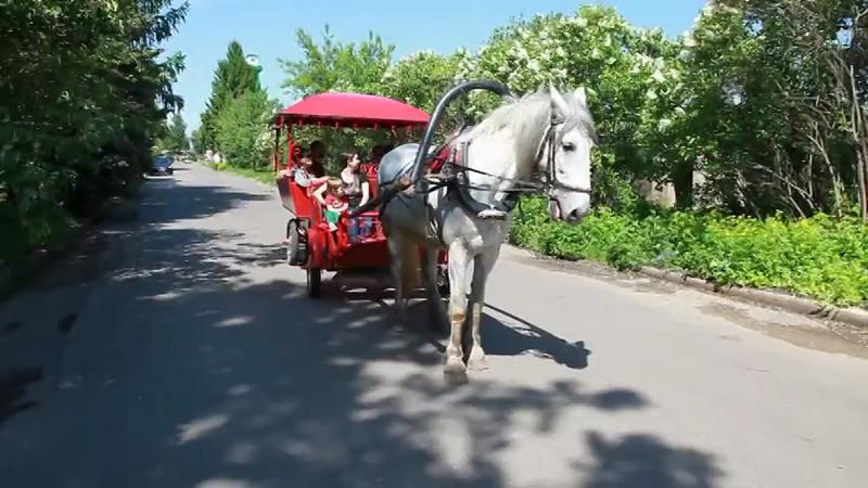 Суздаль, карета, дизельная лошадь.