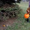 Daniel Trego, 2 1/2, looks for eggs along a tree line. (Pioneer Press: Sherri LaRose-Chiglo)