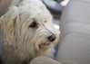 NJ trip animals 5-2014-4526