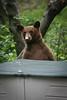 Bear May 0644