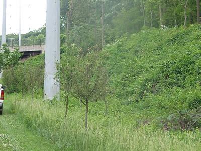 W-OD Trail