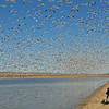 JASON VACLAVEK PHOTOGRAPHING SNOW GEESE BLAST OFF AT BOSQUE DEL APACHE N.W.R., NEW MEXICO