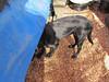 Kona checks tub availability under the planting table.