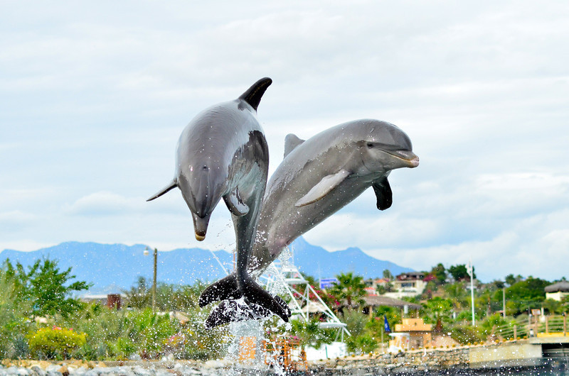 DOLPHIN DISCOVERT_2
